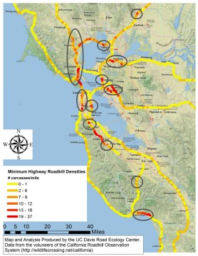 Bay Area wildlife collision hotspots.