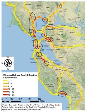 Bay Area wildlife collision hotspots.