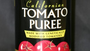 Tomato paste made from genetically engineered tomatoes in the mid-1990s.