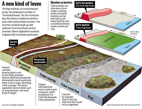 Are Wetlands Nature U2019s Best Defense Against Sea Level Rise