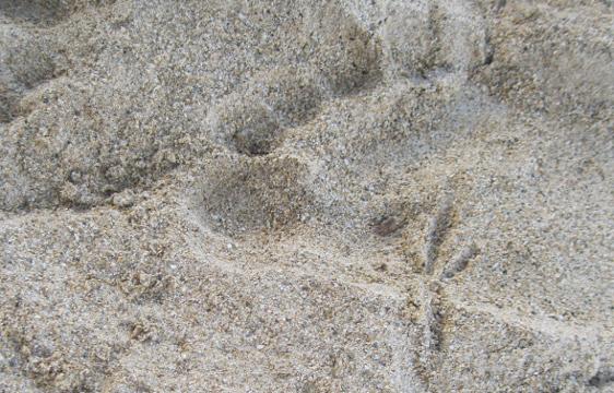 Footprints (3)