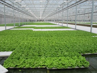 The plants are raised in a contained environment, with no pollutants, no pesticides, and no environmental contaminants.