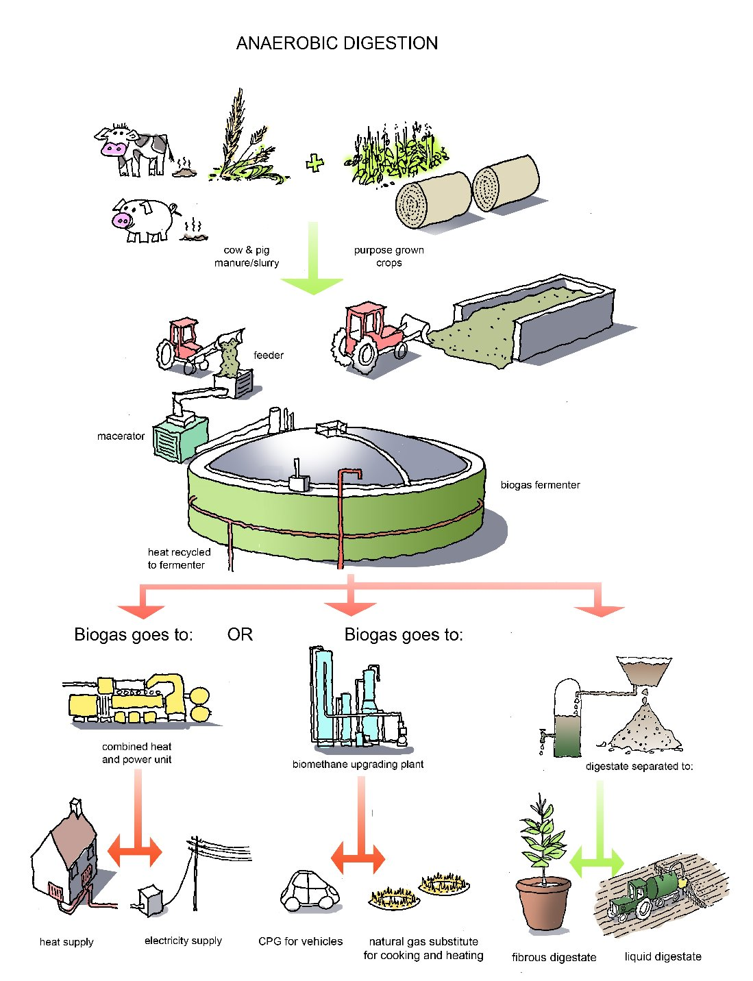 Harnessing The Hidden Power Of Cow Manure Quest Kqed Science Biogas Plant Diagram Advantages Digester Generation Ad 2