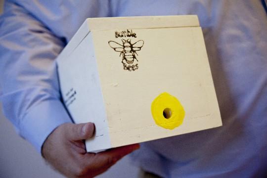 Bumblebee Box