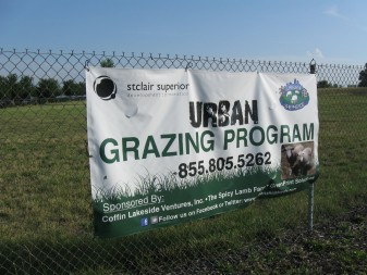 The Urban Shepherds run a sheep-grazing  program on this vacant Cleveland lot, and hope to deploy this model in other urban areas.