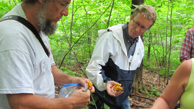 Participants harvest Chanterelle mushrooms during a recent forest farming workshop at the Holden Arboretum in Kirkland, Ohio. Credit:  Holden Arboretum.