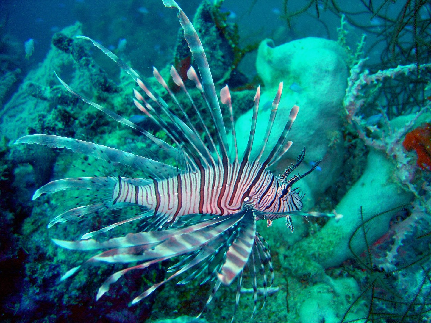 Lionfish, Pythons, and Garlic Mustard — Oh My! | QUEST ...