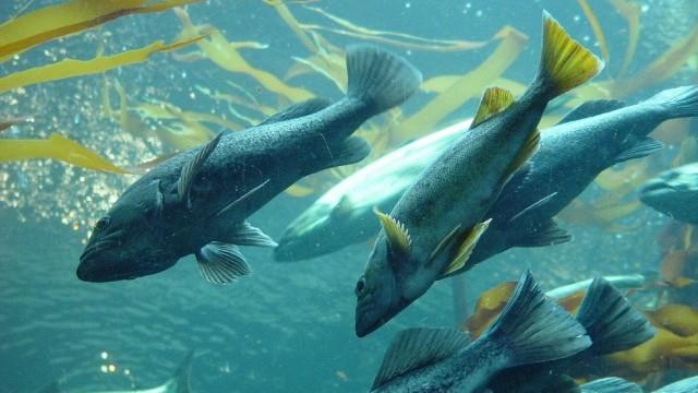 The Seattle Seawall Project: Transforming Salmon Habitat