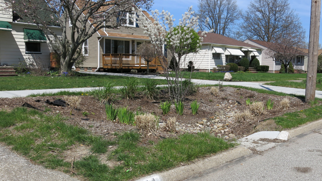 Rain gardens, like this one planted in Parma, OH, absorb stormwater and prevent it from overloading the sewage system.