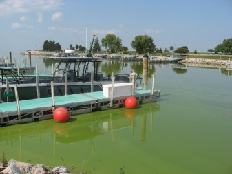 By August 19, 2013, harmful algal blooms had begun growing in the western end of Lake Erie. This is the marina at Maumee Bay State Park. Credit: Jean O'Malley