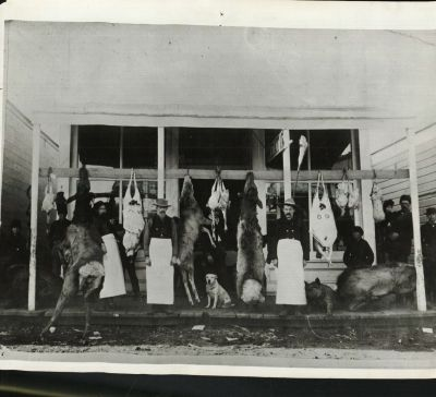 The Keith County Market, a butcher shop in Ogallala, NE at Christmas time in 1888.  The image was donated by Mrs. William H. Copeland, the granddaughter of the butcher at the right in the photo.  These personal records are keys to understanding how important wildlife has been to the history of Nebraska, and how our landscape and culture have changed since these photos were taken.  How many species of wild animals can you see in this photo?!  Can you purchase them today?  Can you see them today? (Caption by Larkin Powell. Photo:  Keith County Historical Society Collection.)