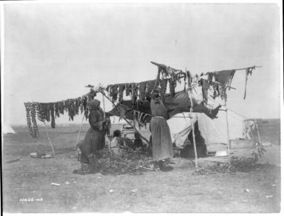 Two Dakota women hanging meat to dry on poles.  These ladies' clothing leads to me guess this was not an enjoyable chore, and probably involved a lot of flying insects.  But, it shows a period of time when people's livelihoods depended on the animals that ranged on our landscapes.  Today, our dependency has largely changed to a relationship with crops grown on the landscapes.  Our relationship to the land is still intimate, but it is different.  (Caption by Larkin Powell. Photo: Edward Curtis Collection; Library of Congress.)