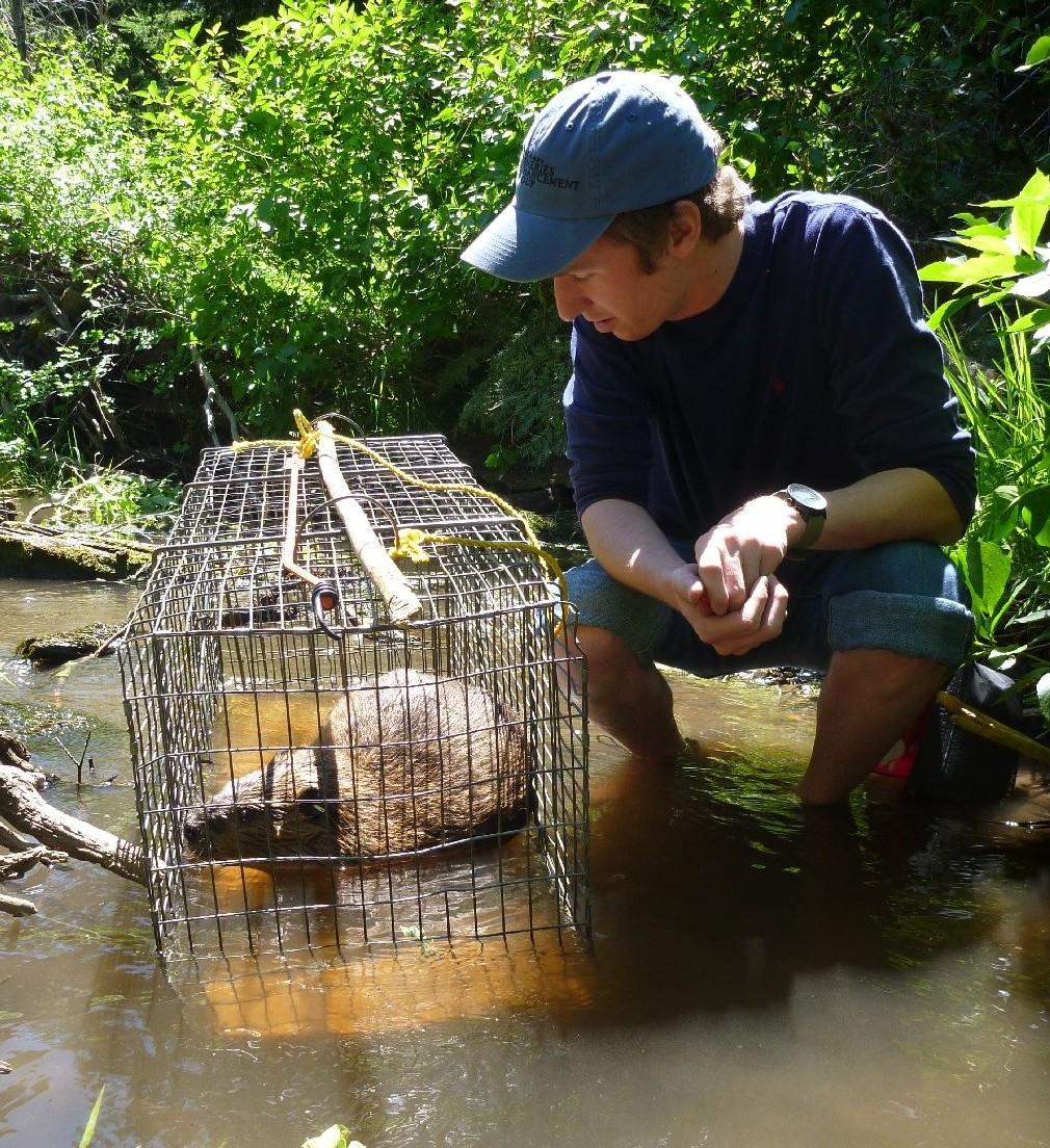 Man near beaver cage