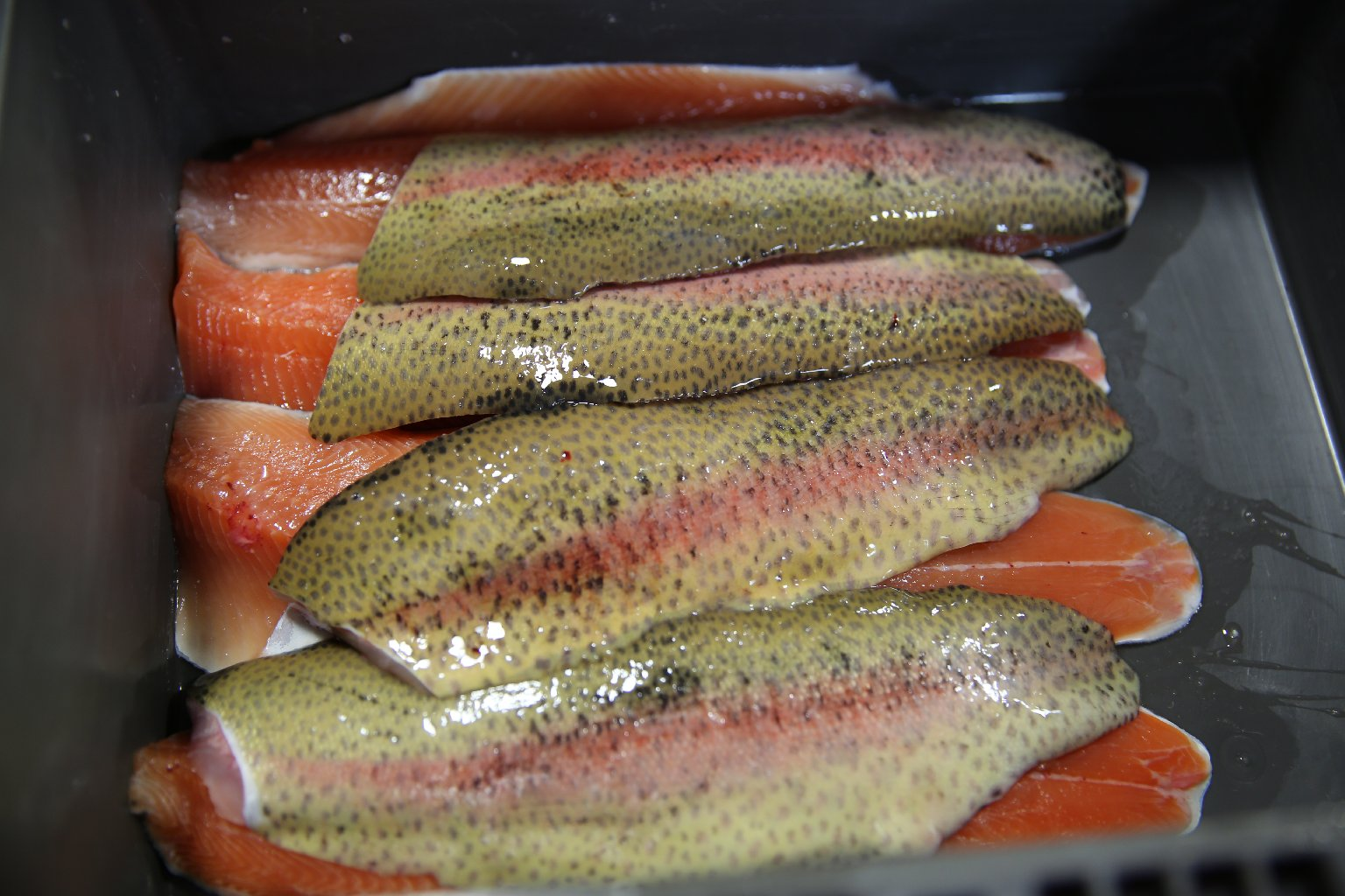 Fillets of TwoXsea's rainbow trout ready for San Francisco restaurants and grocery stores. Lindsey Hoshaw/QUEST.