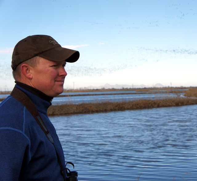 Rice farmer Douglas Thomas watches thousands of snow geese take flight. (Lauren Sommer/KQED)
