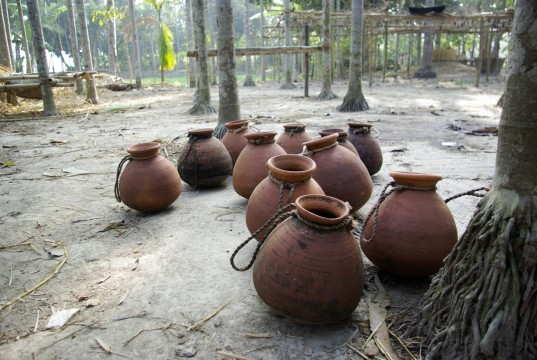 Date palm sap is collected in clay pots like these. Covering the pots with fabric to keep the bats out can prevent contaminationDate palm sap pots. Photo courtesy of Micah Hahn.