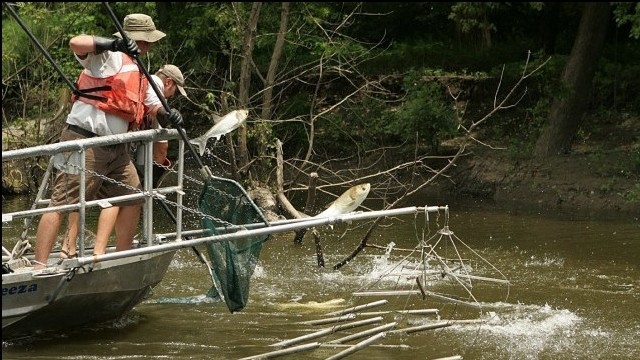 Technologies Poised to Keep Asian Carp at Bay, Slowed by Challenges