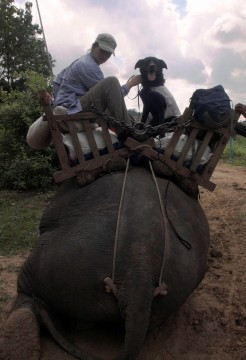 As part of a pilot program for locating wild Asian elephant dung in Myanmar, Wicket traversed otherwise impassable roads on elephant back — a first for her and the elephants. Photo by S.Hedges/WCS
