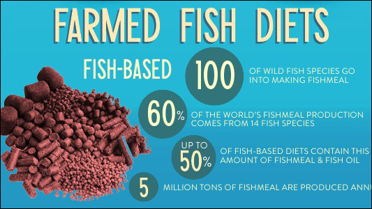 Infographic: Can Farmed Fish Go Vegetarian?