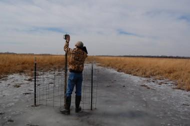 Crane Trust Wildlife Biologist Greg Wright checks a camera that was left in place year-round, eleveated and fenced to protect it from cattle. Now that it's spring, he'll remove the fence and drop the camera height so that it can once again capture images of cranes. Photo by Ariana Brocious, NET News.