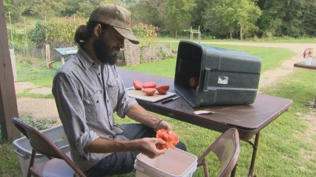 Tomato seeding