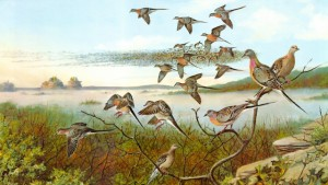 "In the 19th century, passenger pigeons were the most abundant birds in the world. Painting ""Distant Thunder,"" by Owen Gromme. Courtesy Anne Marie Gromme."