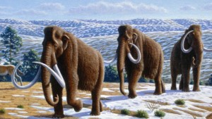 If revived, woolly mammoths could help keep the permafrost from melting, say scientists. Illustration by Mauricio Antón, courtesy PLoS Biology.