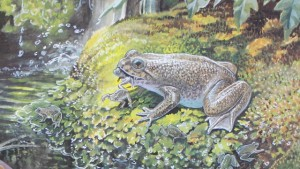 The extinct gastric brooding frog gave birth through its mouth. Painting by Peter Schouten, courtesy Michael Archer.