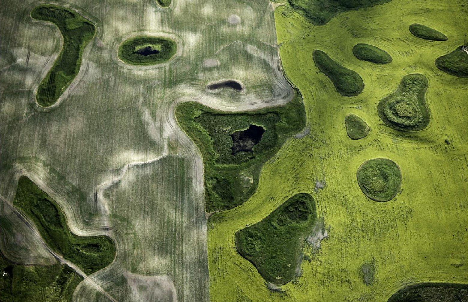 Aerial, pothole wetlands, North Dakota