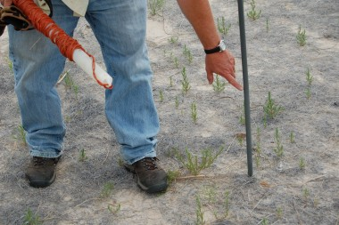 Dave Wedin shows how much sand has been lost on one of his test plots recently.