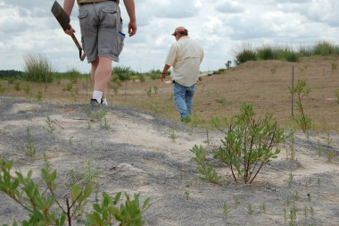 Paul Hanson and David Wedin walk through a test plot being revegetated.