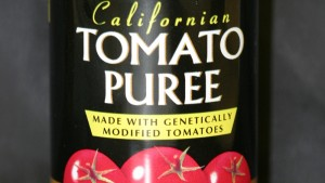 Genetically engineered tomatoes created in Davis, California, in the mid-1990s were made into an inexpensive tomato paste that sold well in England. The engineered tomatoes and the paste were both labeled, but were short-lived. Photo: Adrian Dubock