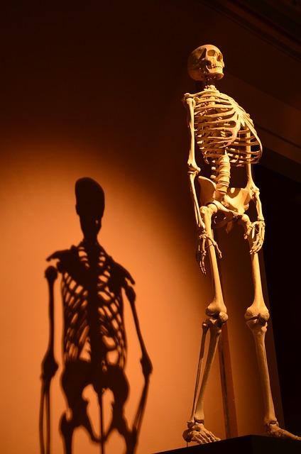 skeleton-457598_640