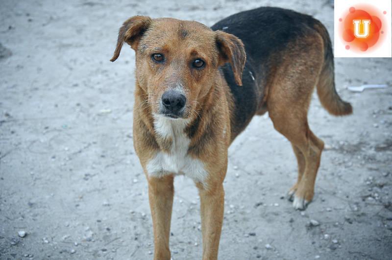 Do No-Kill Shelters Really Benefit Animals?