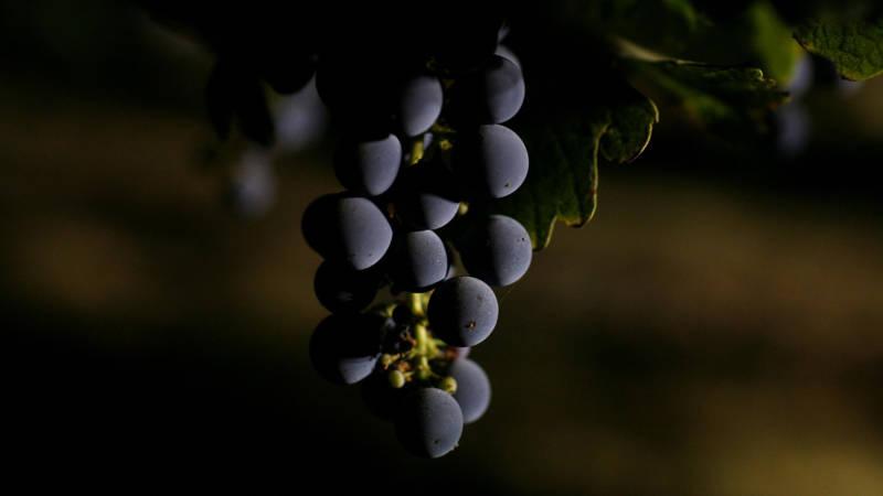 James Conaway: Bad Wine and Big Money in Napa Valley