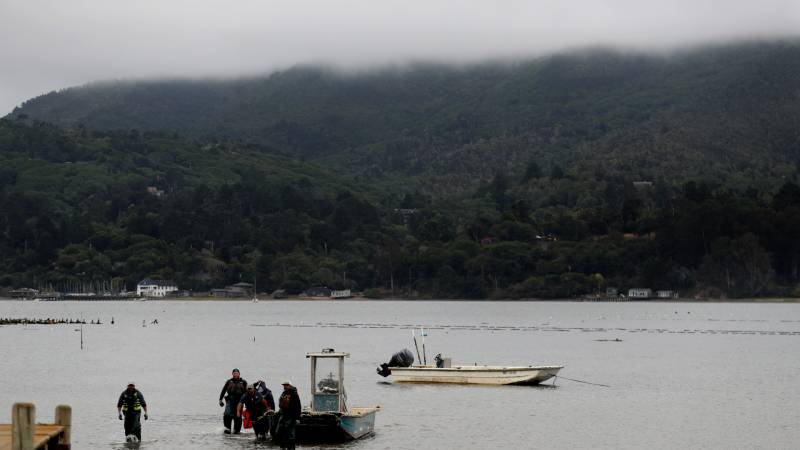 Workers at Tomales Bay Oyster Co. pull their boat in after harvesting oysters on August 20, 2019 in Marshall, California.