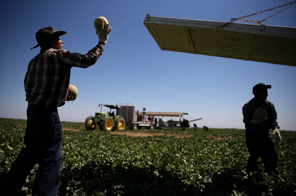Climate One: Chasing the Harvest in the Heat