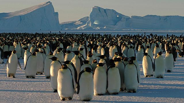 Nature: Snowbound Animals of Winter