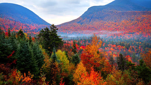 Autumnwatch New England