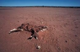 Australia's Simpson Desert. Photo: Mike Gillam