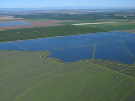 Flooded rice fields in the Sacramento Valley. Photo: Craig Miller