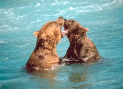 Bearfight_blog