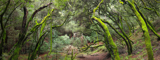 Redwood Regional Park is part of the sprawling East Bay Park District. Photo: Miguel Vieira/Flickr