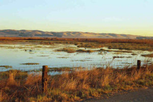 Suisun Marsh is one of the largest marshes in the state. Photo: Mary Mactavish/Flickr