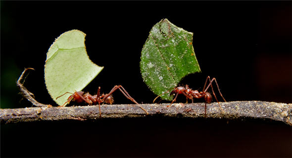 ants-marqueeimage-590