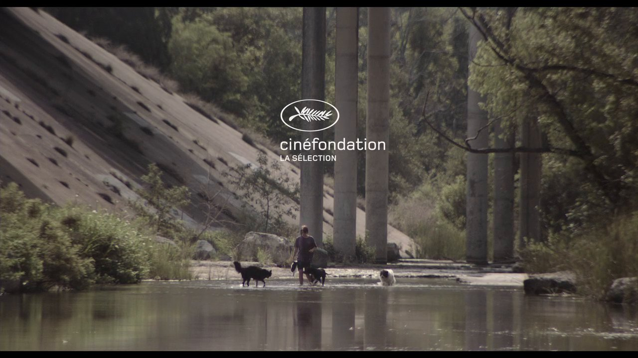 Skunk cinefondationll