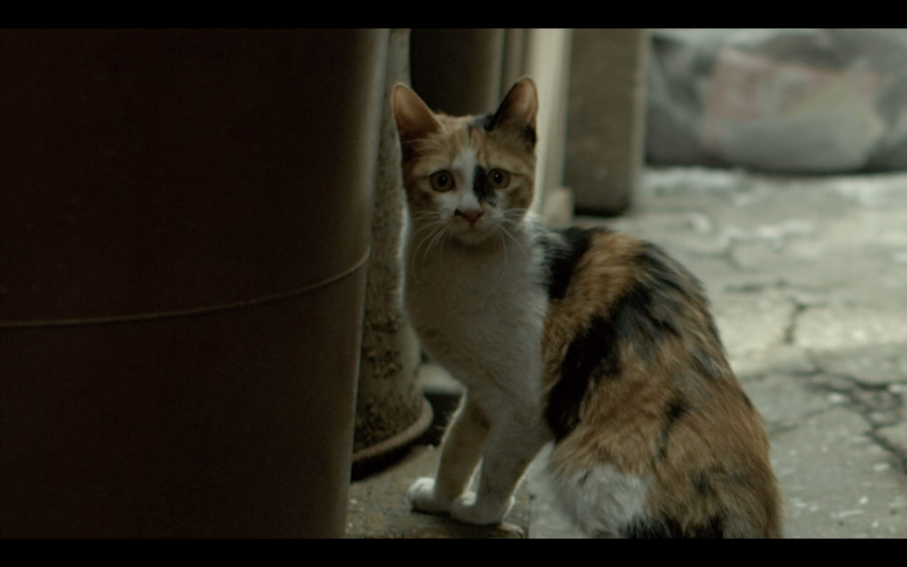 A stray cat in the slum neighborhood staring at Minsu Sung as the Thug