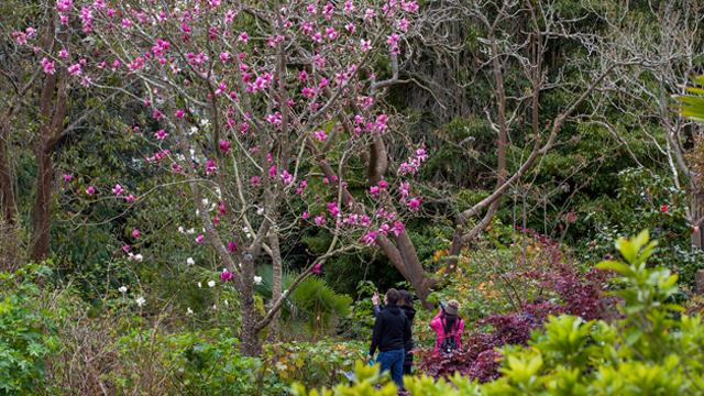 SF Botanical Gardens